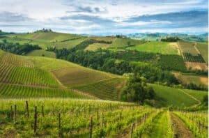 paysage_viticole_du_piemont